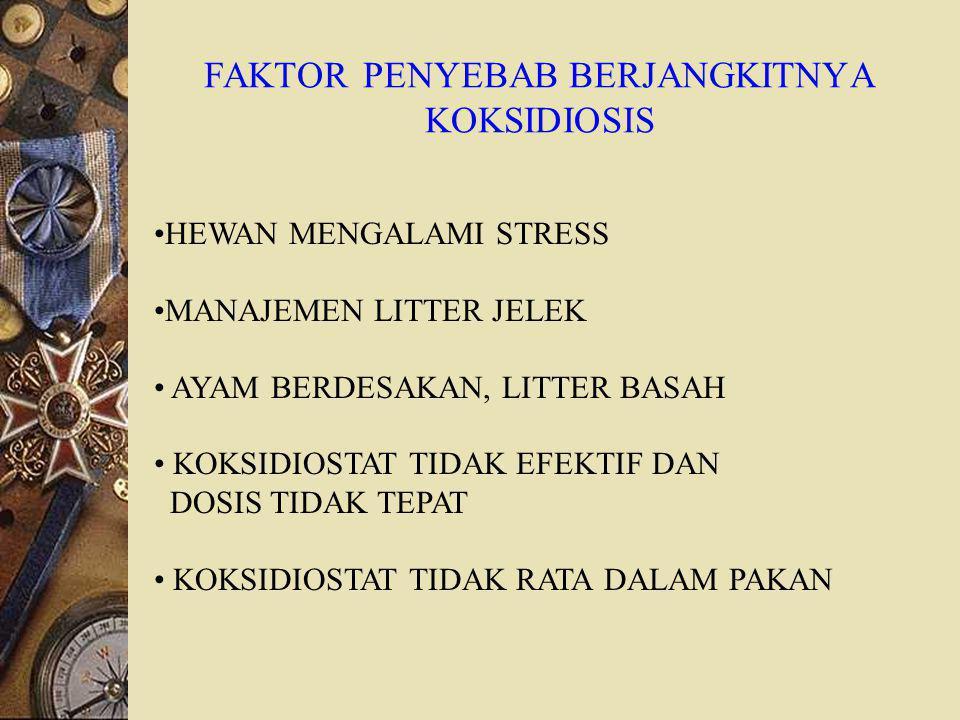 FAKTOR PENYEBAB BERJANGKITNYA KOKSIDIOSIS HEWAN MENGALAMI STRESS MANAJEMEN LITTER JELEK AYAM BERDESAKAN, LITTER BASAH KOKSIDIOSTAT TIDAK EFEKTIF DAN DOSIS TIDAK TEPAT KOKSIDIOSTAT TIDAK RATA DALAM PAKAN
