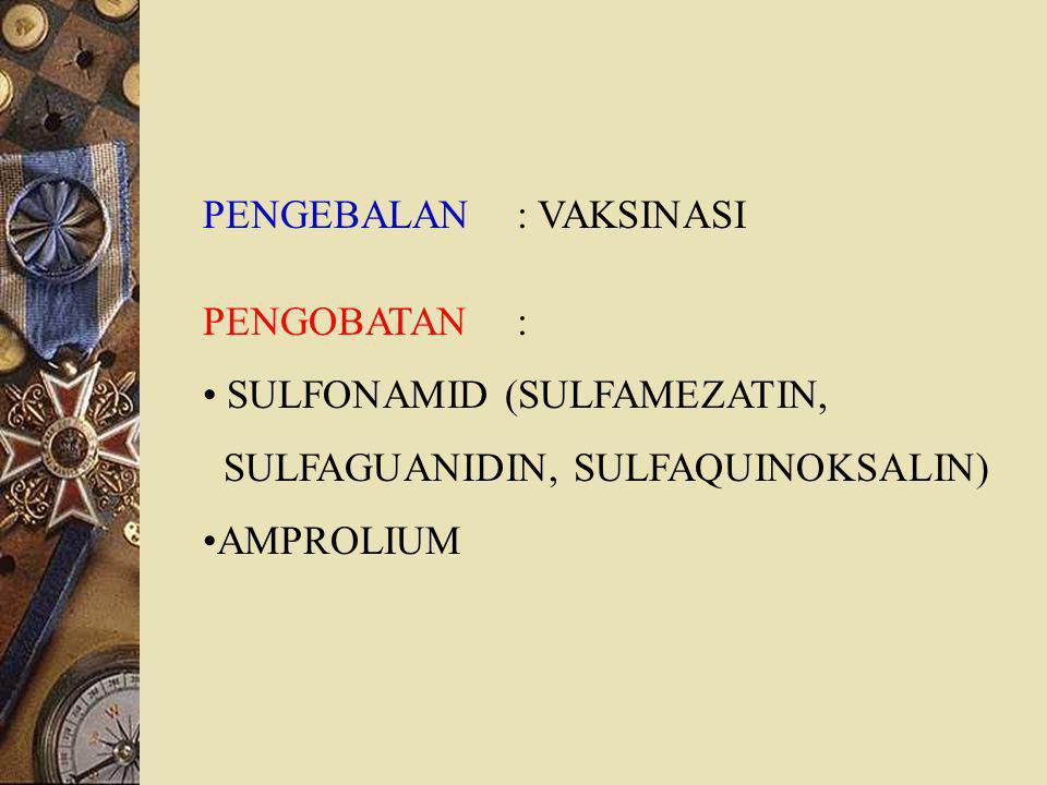 PENGEBALAN: VAKSINASI PENGOBATAN: SULFONAMID (SULFAMEZATIN, SULFAGUANIDIN, SULFAQUINOKSALIN) AMPROLIUM