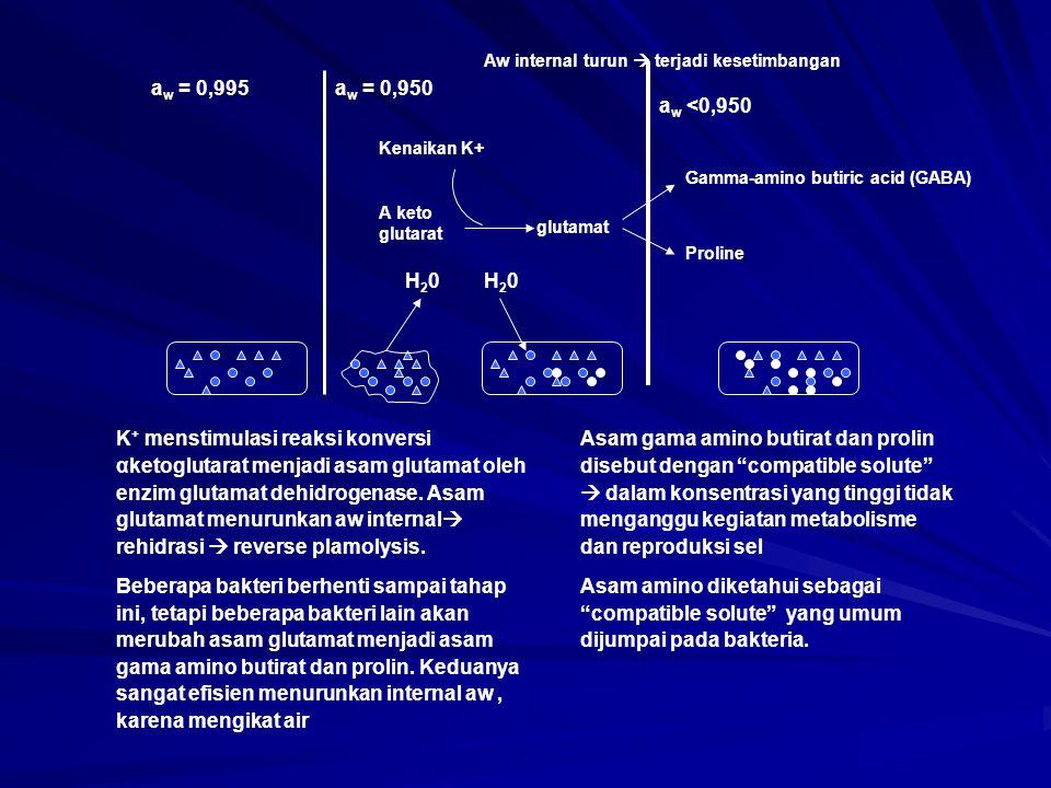 K + menstimulasi reaksi konversi αketoglutarat menjadi asam glutamat oleh enzim glutamat dehidrogenase. Asam glutamat menurunkan aw internal  rehidra