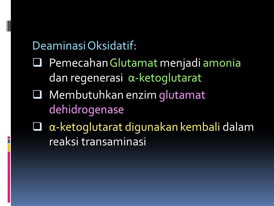 Deaminasi Oksidatif:  Pemecahan Glutamat menjadi amonia dan regenerasi α-ketoglutarat  Membutuhkan enzim glutamat dehidrogenase  α-ketoglutarat dig