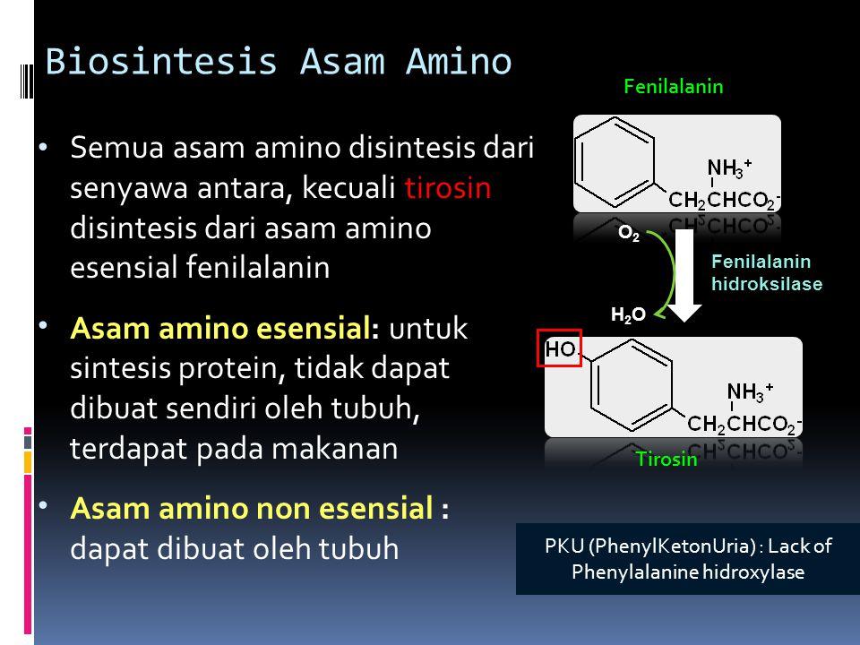 Biosintesis Asam Amino Semua asam amino disintesis dari senyawa antara, kecuali tirosin disintesis dari asam amino esensial fenilalanin Asam amino ese