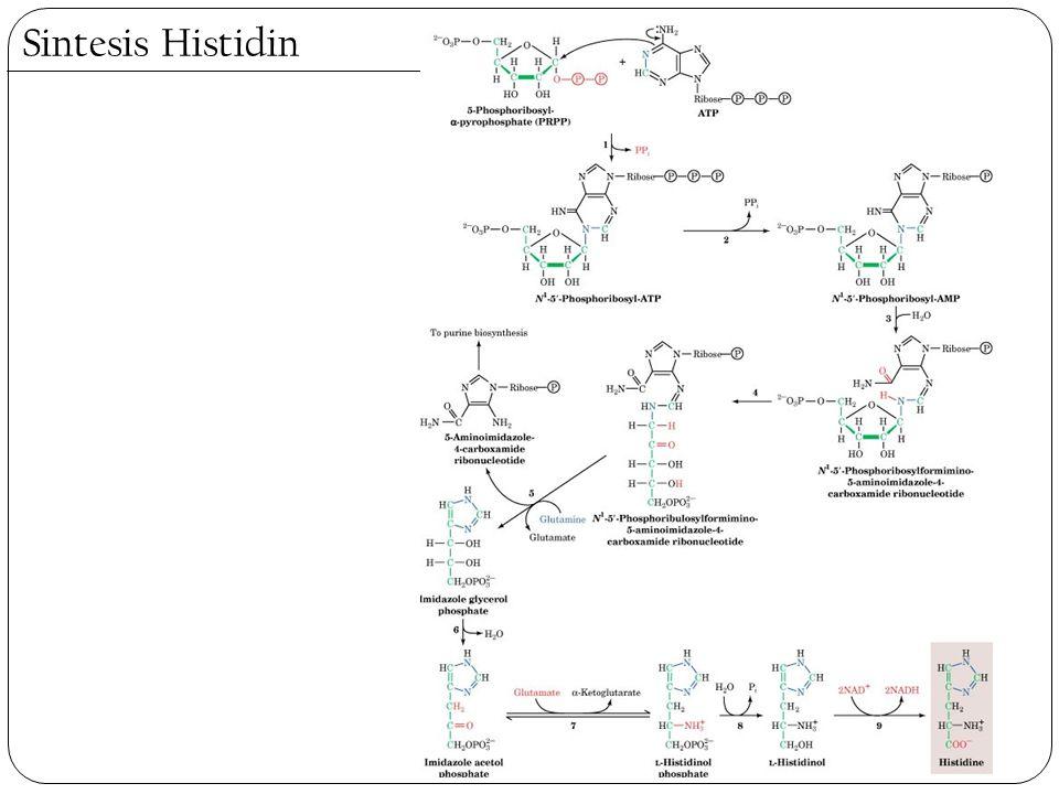 Sintesis Histidin