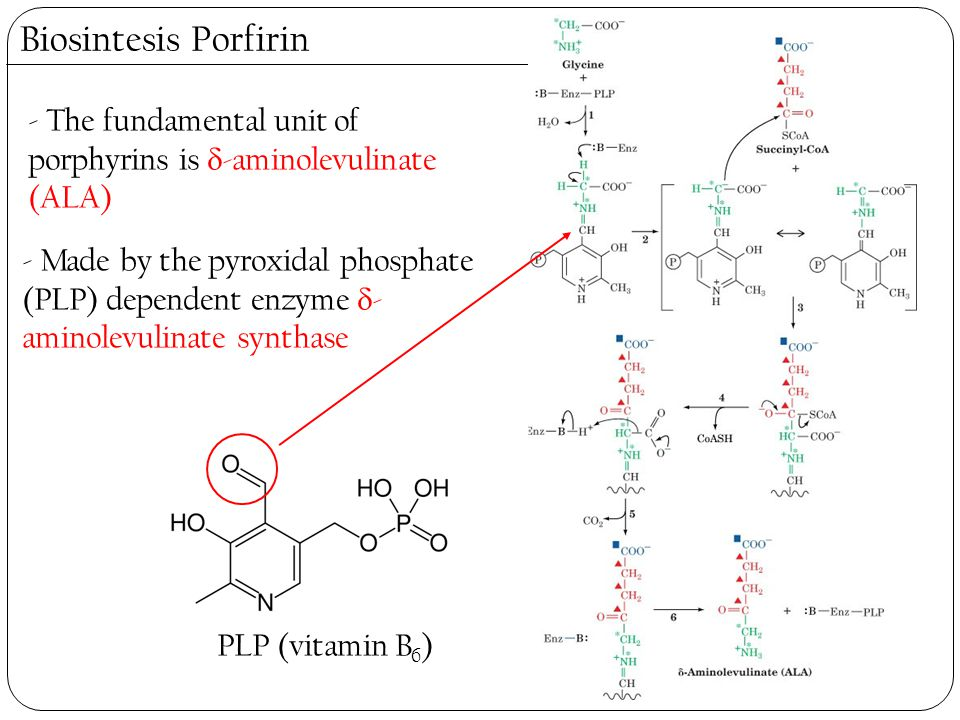 Biosintesis Porfirin - The fundamental unit of porphyrins is  -aminolevulinate (ALA) - Made by the pyroxidal phosphate (PLP) dependent enzyme  - ami