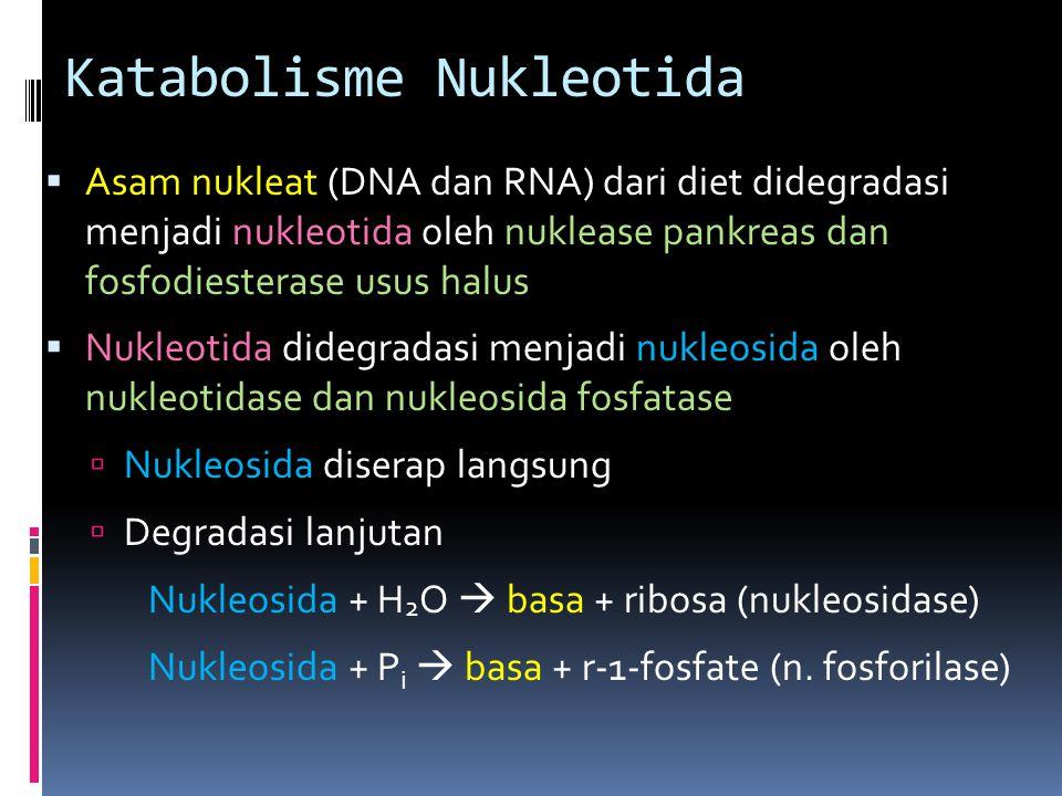 Katabolisme Nukleotida  Asam nukleat (DNA dan RNA) dari diet didegradasi menjadi nukleotida oleh nuklease pankreas dan fosfodiesterase usus halus  N