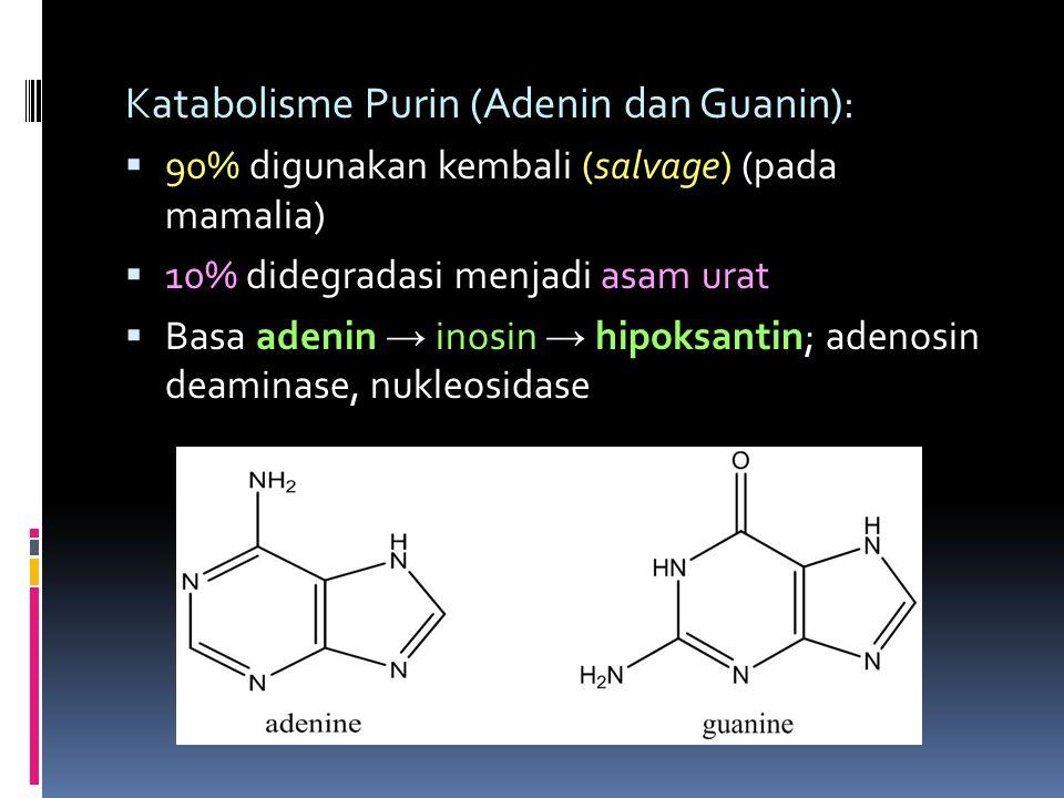 Katabolisme Purin (Adenin dan Guanin):  90% digunakan kembali (salvage) (pada mamalia)  10% didegradasi menjadi asam urat  Basa adenin → inosin → h