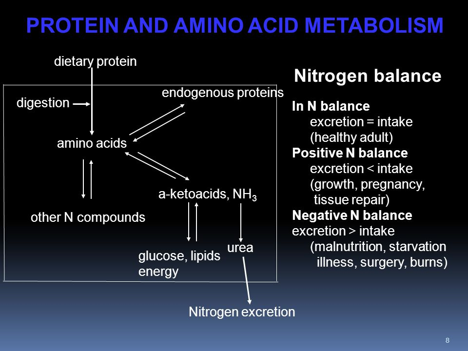 9 PROTEIN AND AMINO ACID METABOLISM Dietary protein is first hydrolyzed to amino acids, then rebuilt into endogenous protein by translation.