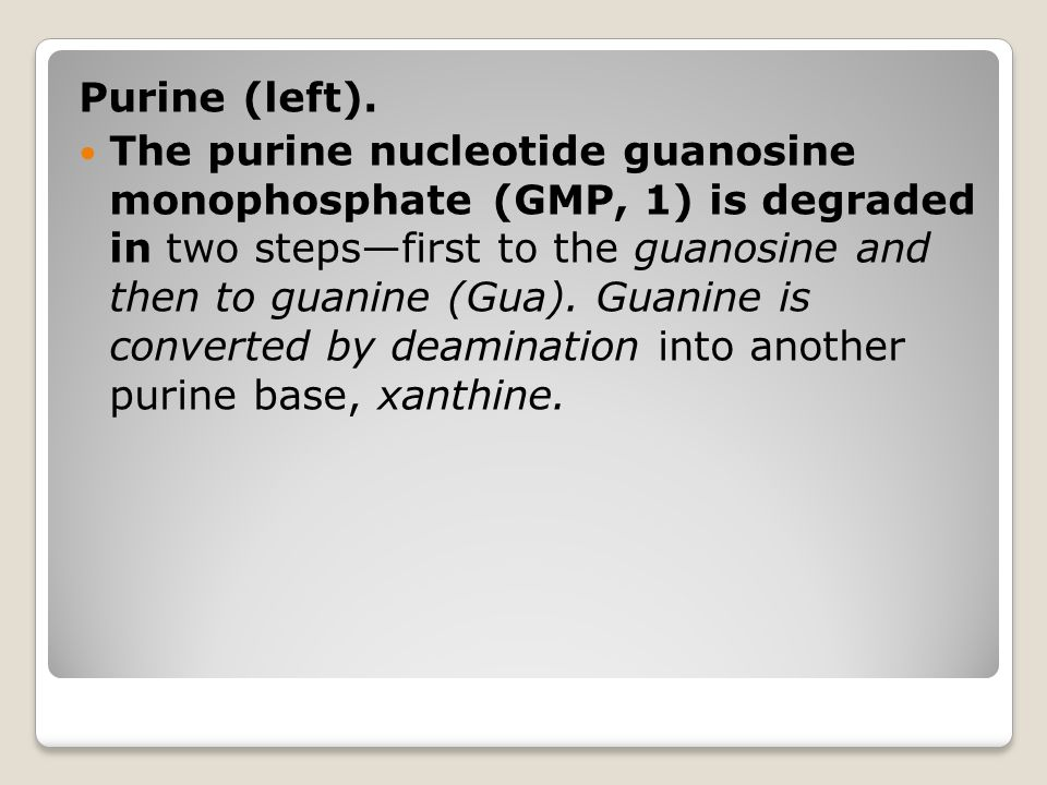 Purine (left). The purine nucleotide guanosine monophosphate (GMP, 1) is degraded in two steps—first to the guanosine and then to guanine (Gua). Guani