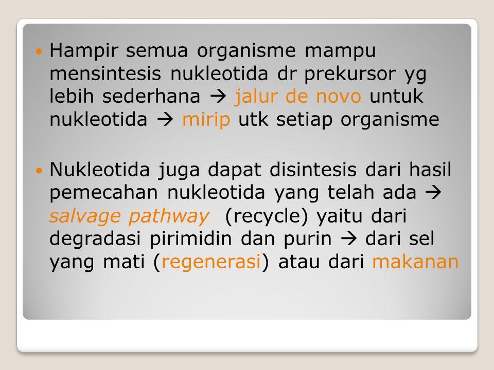 Hampir semua organisme mampu mensintesis nukleotida dr prekursor yg lebih sederhana  jalur de novo untuk nukleotida  mirip utk setiap organisme Nukl