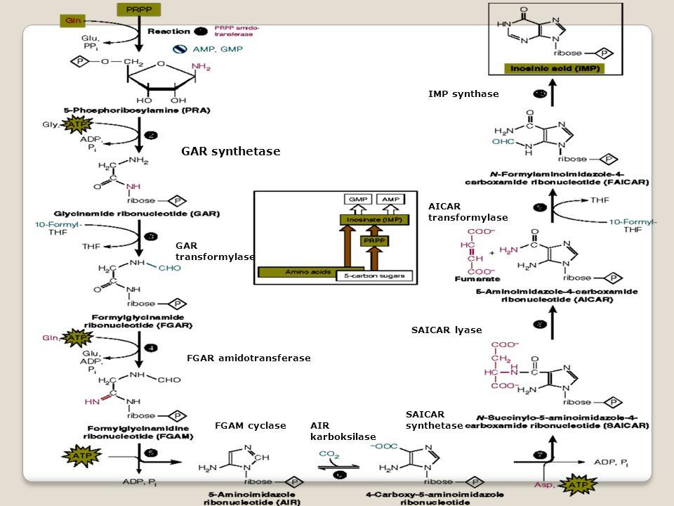 GAR synthetase GAR transformylase FGAR amidotransferase FGAM cyclaseAIR karboksilase SAICAR synthetase SAICAR lyase AICAR transformylase IMP synthase