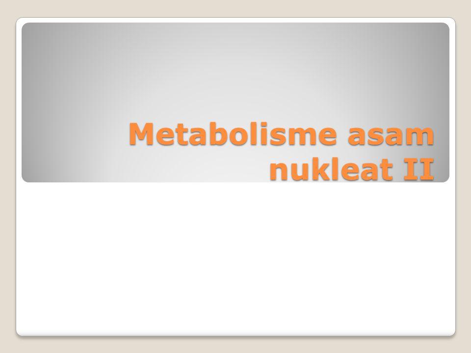 Metabolisme asam nukleat II