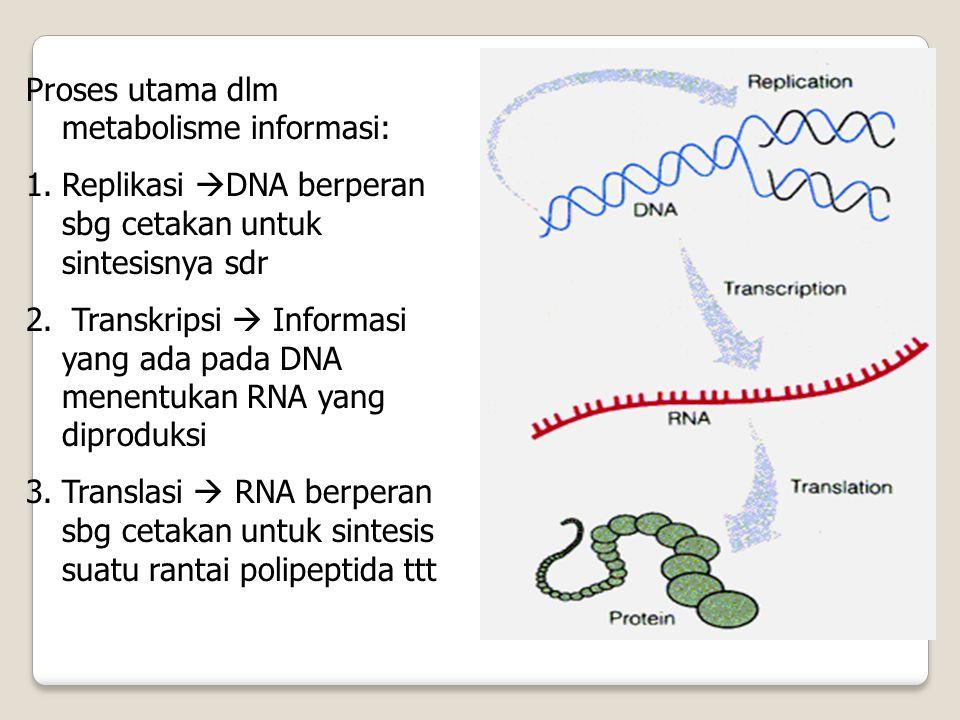 Proses utama dlm metabolisme informasi: 1.Replikasi  DNA berperan sbg cetakan untuk sintesisnya sdr 2. Transkripsi  Informasi yang ada pada DNA mene