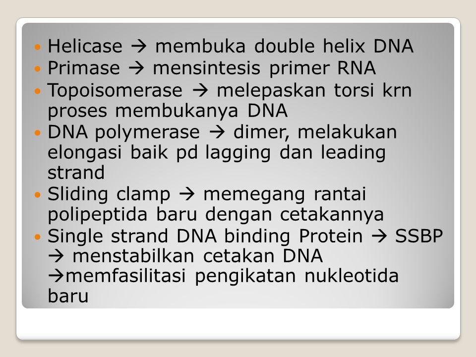 Helicase  membuka double helix DNA Primase  mensintesis primer RNA Topoisomerase  melepaskan torsi krn proses membukanya DNA DNA polymerase  dimer