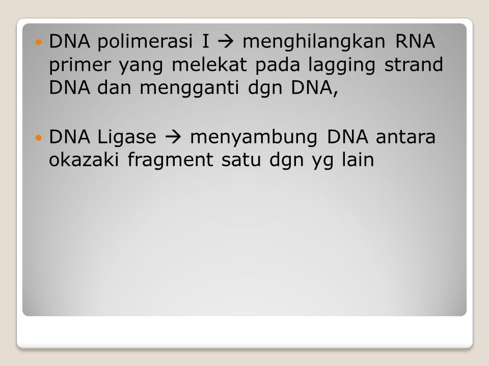 DNA polimerasi I  menghilangkan RNA primer yang melekat pada lagging strand DNA dan mengganti dgn DNA, DNA Ligase  menyambung DNA antara okazaki fra
