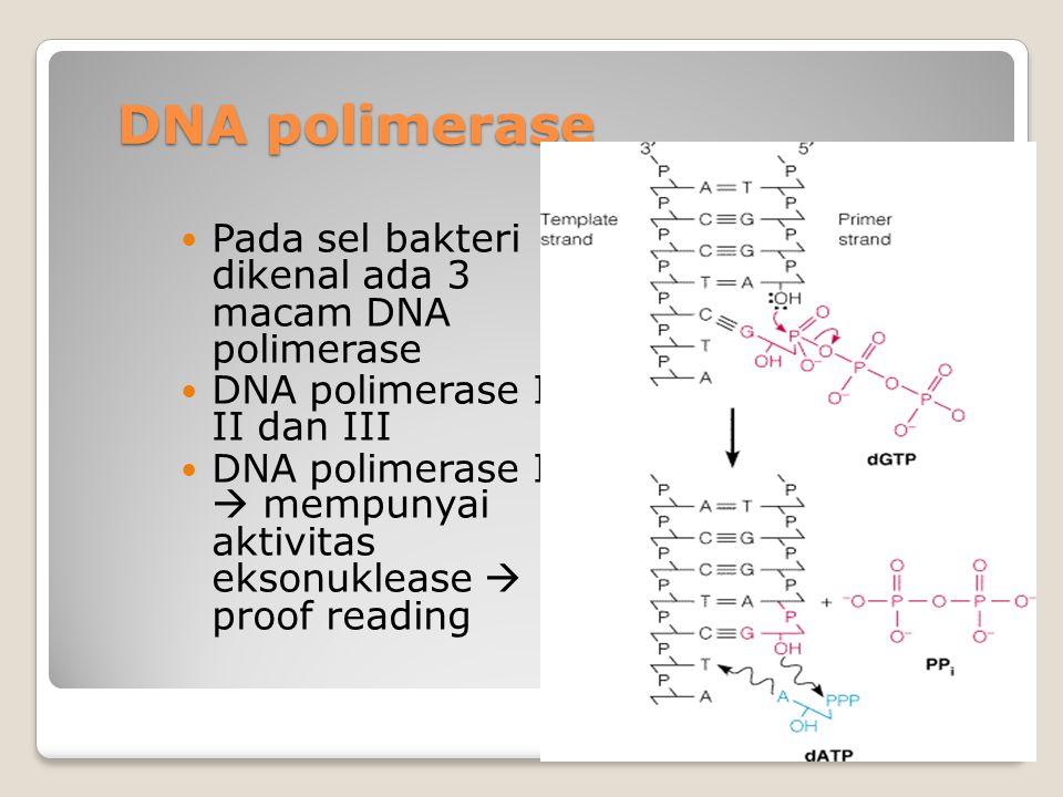 DNA polimerase Pada sel bakteri dikenal ada 3 macam DNA polimerase DNA polimerase I, II dan III DNA polimerase I  mempunyai aktivitas eksonuklease 