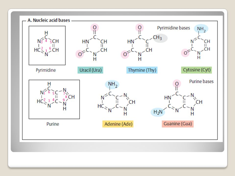 Nucleotide biosynthesis De novo synthesis of purines and pyrimidines yields the monophosphates IMP and UMP, respectively.