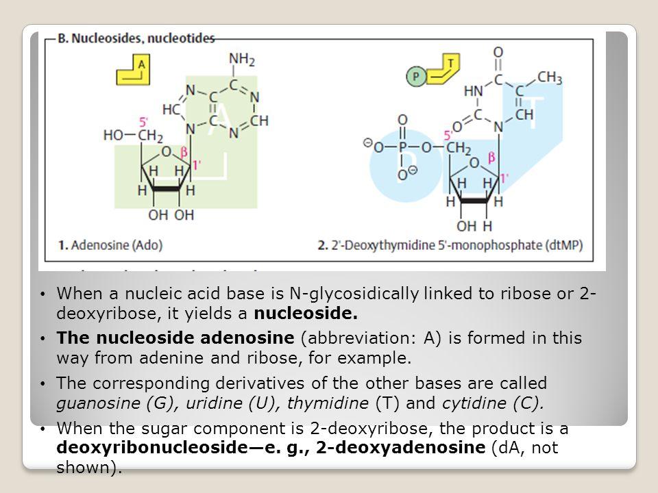 5-Phospho- -D-ribosyl-1- pyrophosphate5-Phospho- -D-ribosyl-1- pyrophosphate (PRPP) 5-Phospho- -D-ribosyl-1- pyrophosphate Intermediet untuk baik proses de novo and salvage pathway Berasal dari ribosa 5 phosphat