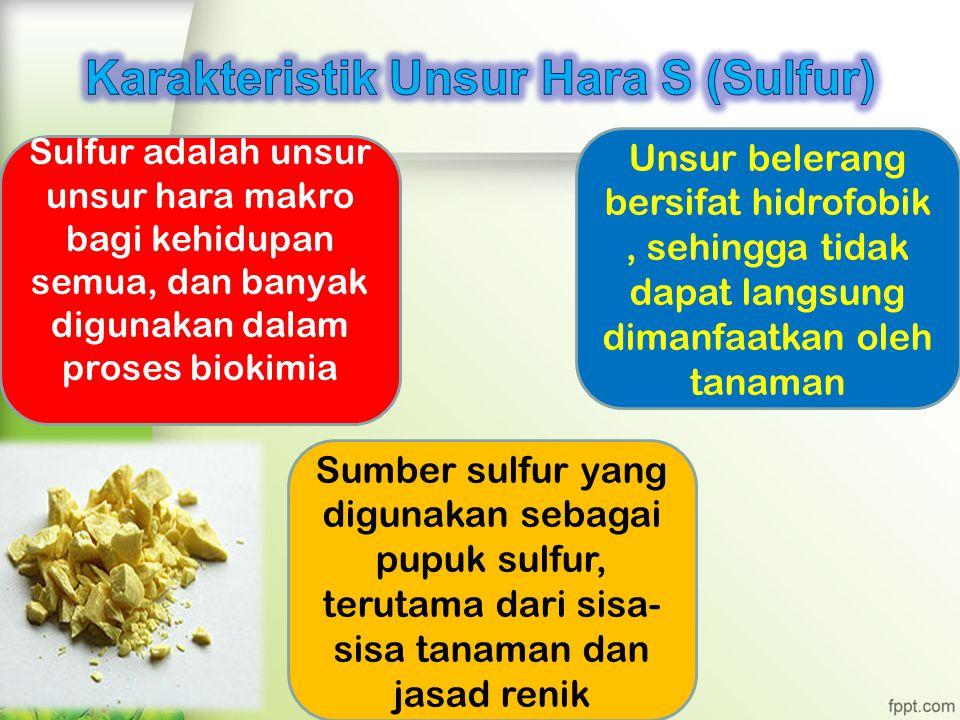 Sulfur adalah unsur unsur hara makro bagi kehidupan semua, dan banyak digunakan dalam proses biokimia Sumber sulfur yang digunakan sebagai pupuk sulfur, terutama dari sisa- sisa tanaman dan jasad renik Unsur belerang bersifat hidrofobik, sehingga tidak dapat langsung dimanfaatkan oleh tanaman