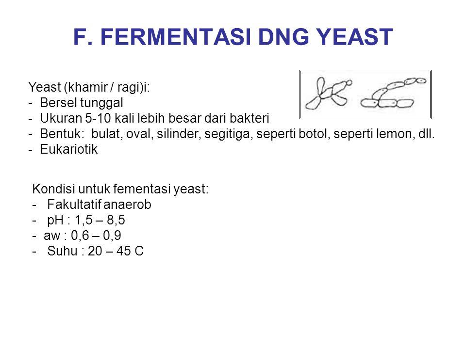 F. FERMENTASI DNG YEAST Yeast (khamir / ragi)i: - Bersel tunggal - Ukuran 5-10 kali lebih besar dari bakteri - Bentuk: bulat, oval, silinder, segitiga
