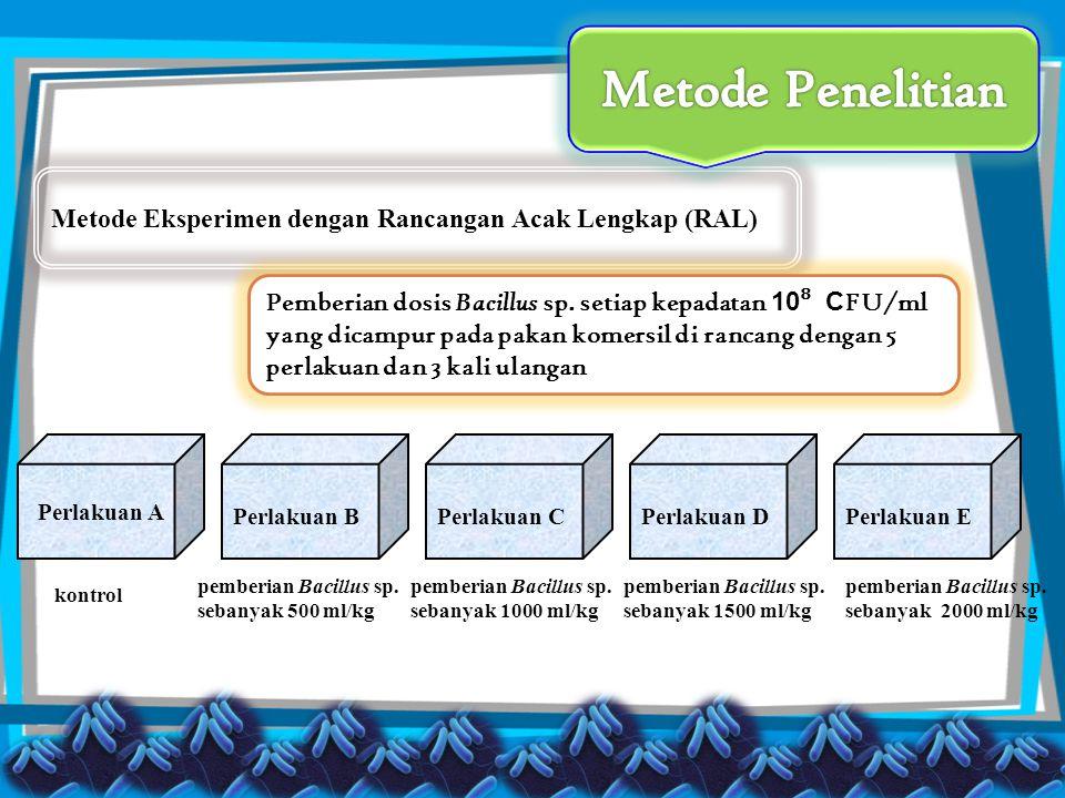 Metode Eksperimen dengan Rancangan Acak Lengkap (RAL) kontrol Perlakuan A Perlakuan BPerlakuan CPerlakuan DPerlakuan E pemberian Bacillus sp. sebanyak