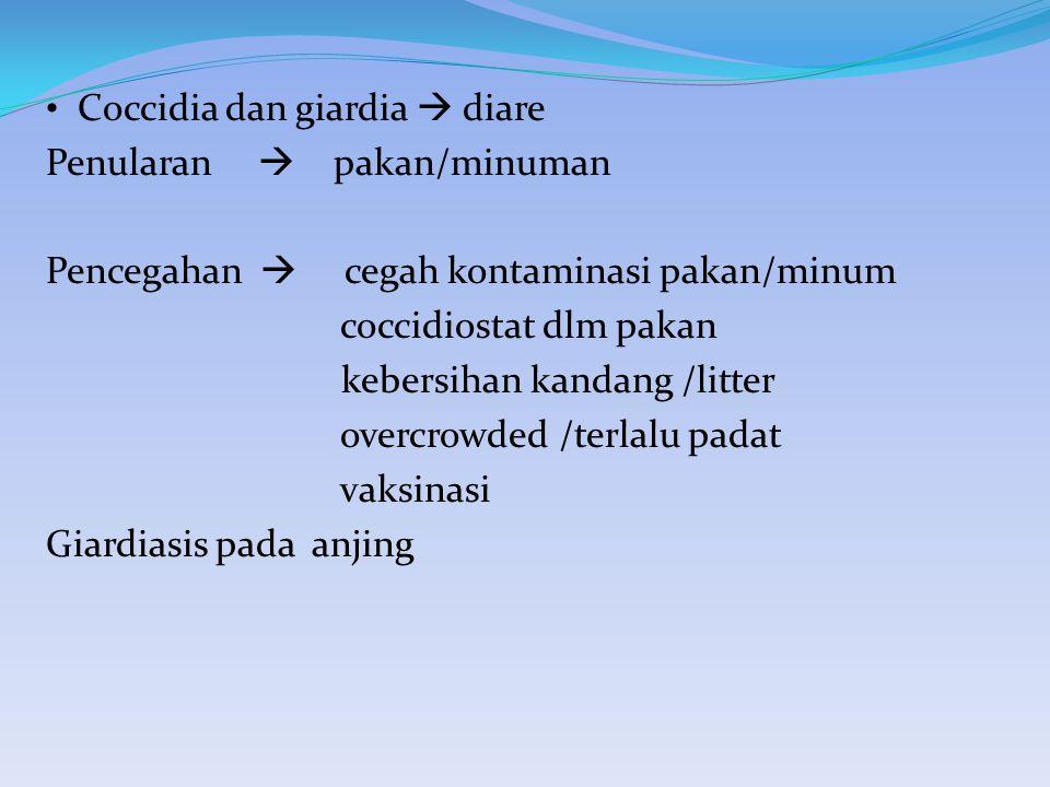 Coccidia dan giardia  diare Penularan  pakan/minuman Pencegahan  cegah kontaminasi pakan/minum coccidiostat dlm pakan kebersihan kandang /litter ov