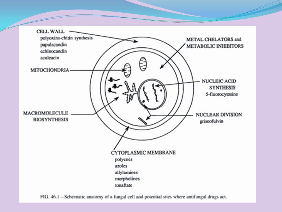 Polyene antifungal agent Bekerja dgn cara mengikat ergosterol membran sel fungi, menyebabkan depolarisasi dan meningkatkan permiabelitas membran, mengakibat kan kebocoran dan kematian sel., contoh: Nystatin (Mycostatin),>fungisidal berasal dari Streptomyces nouresi, biasa dikombinasikan dgn neomysin,triamcinolone acetonid (per oral utk infeksi Candida albicans >>GIT, ointment utk infeksi topical pada kulit)>>candidiasis, anjing dan kucing Ayam >>candidiasis GIT Amphotericin B,  fungistatic atau fungisidal, berasal dari Streptomyces nodosus, (inj.IV dlm larutan 5% dextrose utk systemic mycoses)>>histoplasmosis (manusia,anjing,sapi,kuda,kucing,)>resp.blastomycosis, coccidioidomycosis Utk anjing dan kucing>>sistemik mikosis, ada efek nephrotoksik,>>selama terapi perlu test fungsi ginjal