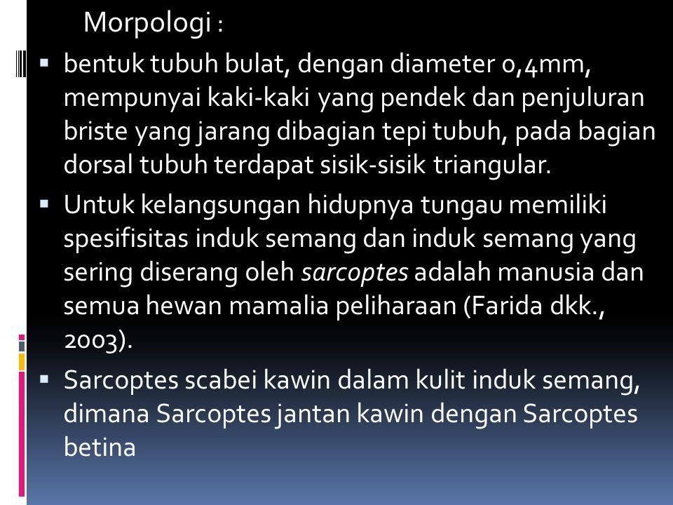 ETIOLOGI  Scabies disebabkan oleh sarcoptes scabei.  Penyakit ini memiliki spesifisitas induk semang, namun dapat menular dari hewan kemanusia dan s