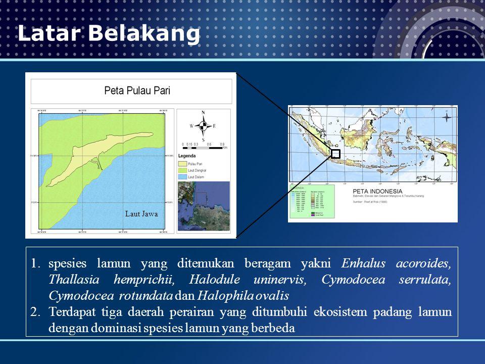 Latar Belakang Laut Jawa 1.spesies lamun yang ditemukan beragam yakni Enhalus acoroides, Thallasia hemprichii, Halodule uninervis, Cymodocea serrulata