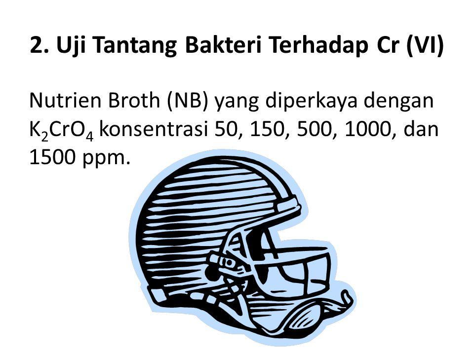 2. Uji Tantang Bakteri Terhadap Cr (VI) Nutrien Broth (NB) yang diperkaya dengan K 2 CrO 4 konsentrasi 50, 150, 500, 1000, dan 1500 ppm.