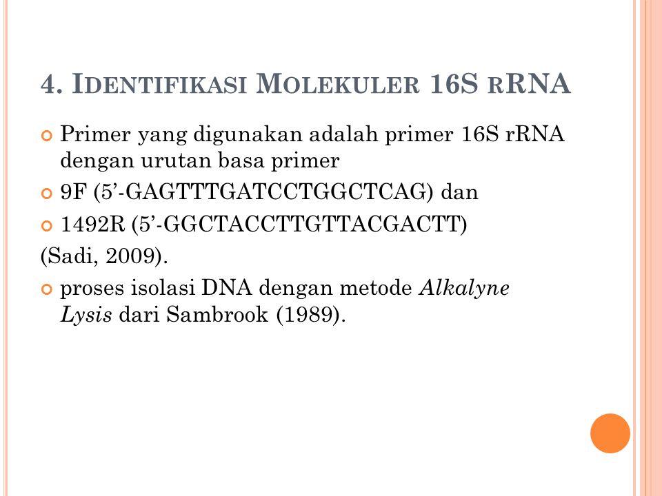4. I DENTIFIKASI M OLEKULER 16S R RNA Primer yang digunakan adalah primer 16S rRNA dengan urutan basa primer 9F (5'-GAGTTTGATCCTGGCTCAG) dan 1492R (5'