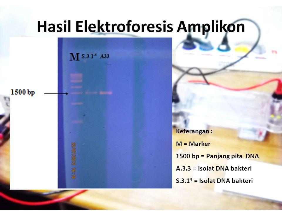 Hasil Elektroforesis Amplikon Keterangan : M = Marker 1500 bp = Panjang pita DNA A.3.3 = Isolat DNA bakteri S.3.1 4 = Isolat DNA bakteri