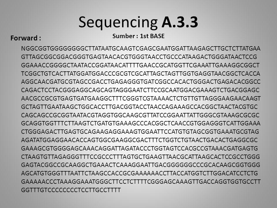 Sequencing A.3.3 Sumber : 1st BASE Forward : NGGCGGTGGGGGGGGCTTATAATGCAAGTCGAGCGAATGGATTAAGAGCTTGCTCTTATGAA GTTAGCGGCGGACGGGTGAGTAACACGTGGGTAACCTGCCCA