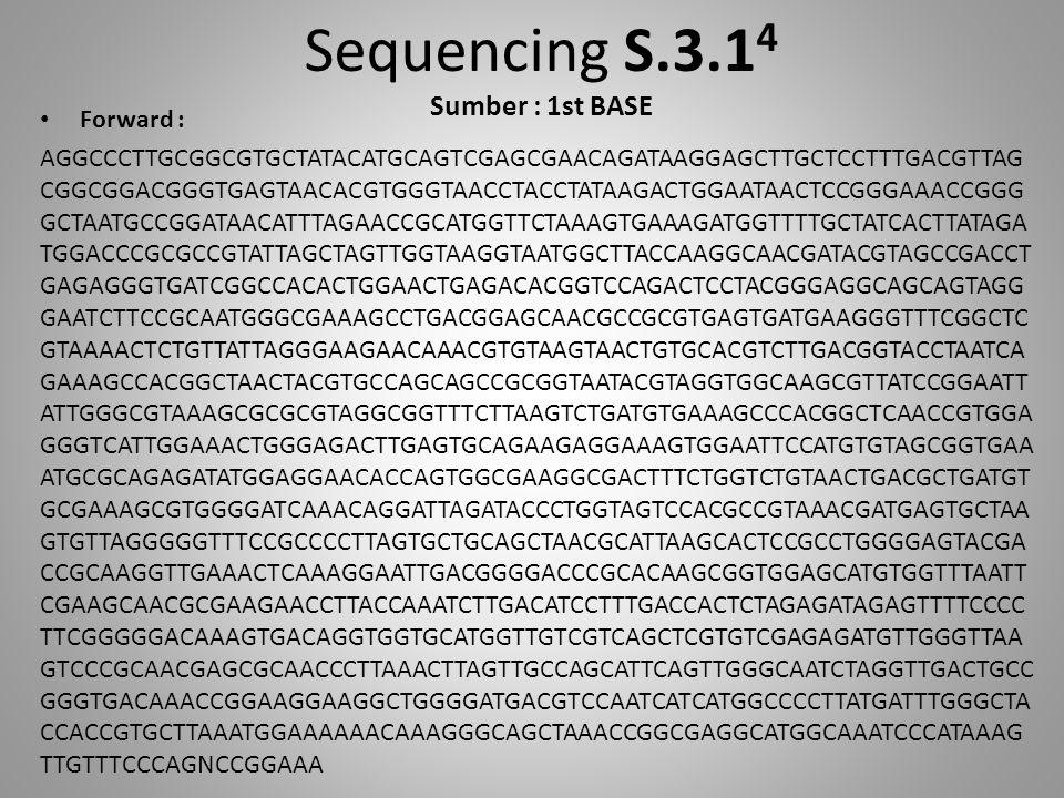 Sequencing S.3.1 4 Sumber : 1st BASE Forward : AGGCCCTTGCGGCGTGCTATACATGCAGTCGAGCGAACAGATAAGGAGCTTGCTCCTTTGACGTTAG CGGCGGACGGGTGAGTAACACGTGGGTAACCTACC