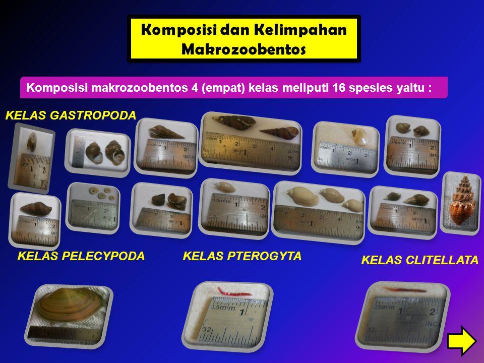 Komposisi makrozoobentos 4 (empat) kelas meliputi 16 spesies yaitu : KELAS GASTROPODA KELAS PELECYPODA KELAS CLITELLATA KELAS PTEROGYTA