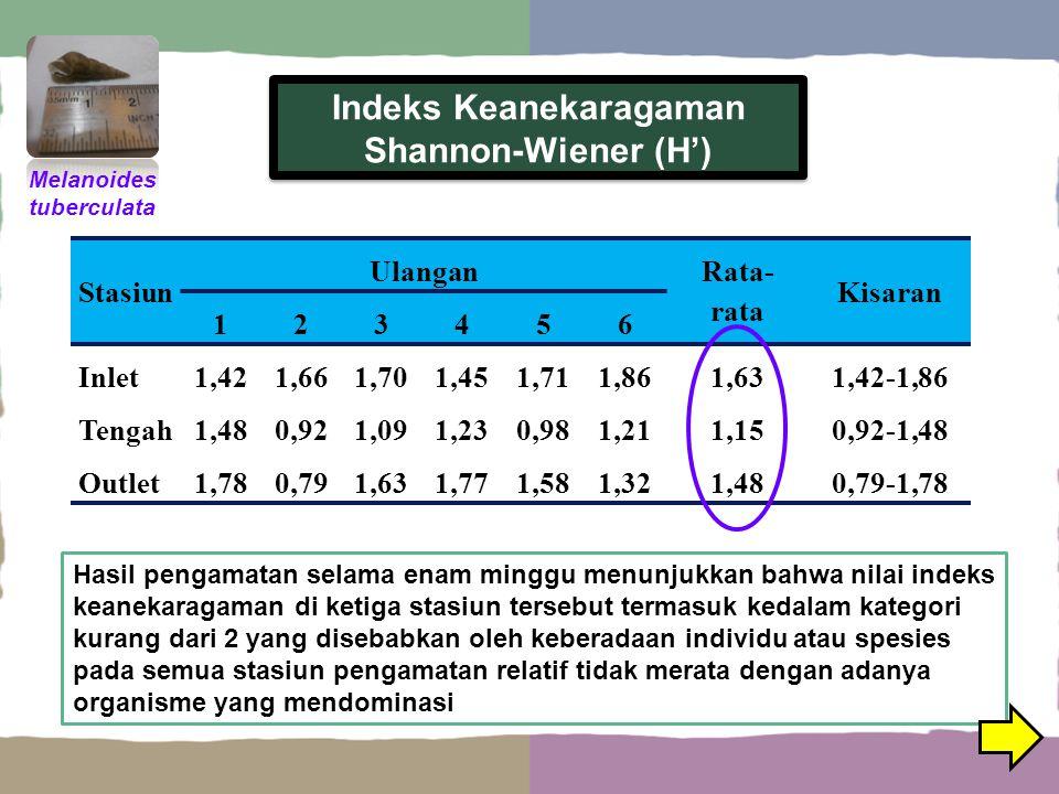 Indeks Keanekaragaman Shannon-Wiener (H') Hasil pengamatan selama enam minggu menunjukkan bahwa nilai indeks keanekaragaman di ketiga stasiun tersebut