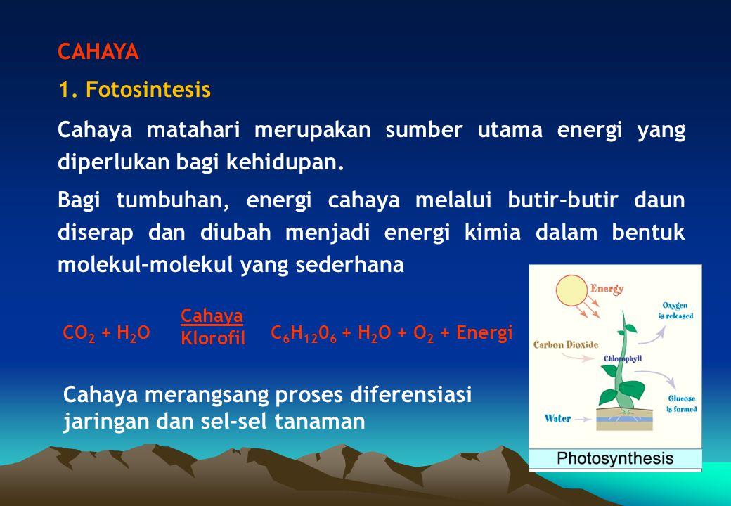 CAHAYA 1. Fotosintesis Cahaya matahari merupakan sumber utama energi yang diperlukan bagi kehidupan. Bagi tumbuhan, energi cahaya melalui butir-butir