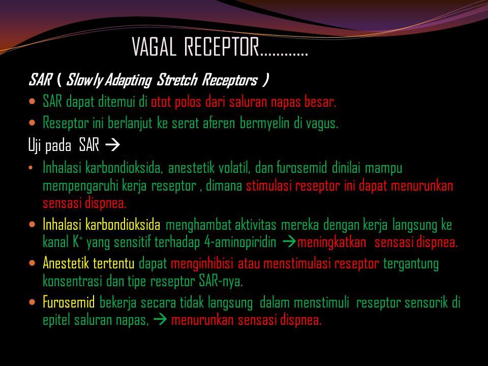 VAGAL RECEPTOR………… SAR ( Slowly Adapting Stretch Receptors ) SAR dapat ditemui di otot polos dari saluran napas besar.