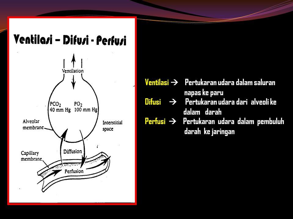 Ventilasi  Pertukaran udara dalam saluran napas ke paru Difusi  Pertukaran udara dari alveoli ke dalam darah Perfusi  Pertukaran udara dalam pembuluh darah ke jaringan