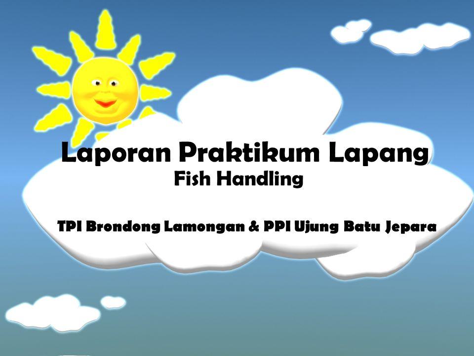 Laporan Praktikum Lapang Fish Handling TPI Brondong Lamongan & PPI Ujung Batu Jepara