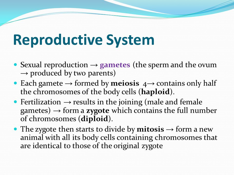 Reproductive System Sexual reproduction → gametes (the sperm and the ovum → produced by two parents) Each gamete → formed by meiosis 4 → contains only