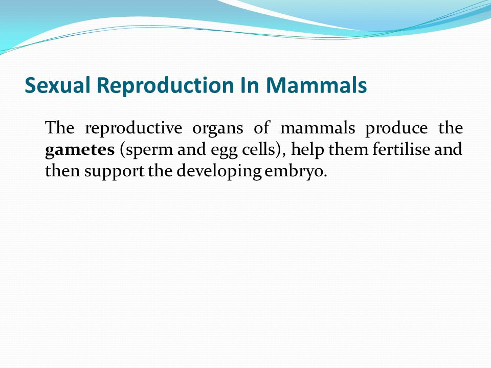 Sexual Reproduction In Mammals The reproductive organs of mammals produce the gametes (sperm and egg cells), help them fertilise and then support the