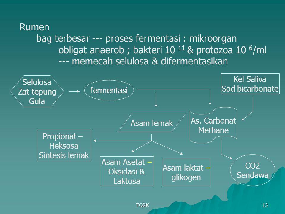 TO2K 13 Rumen bag terbesar --- proses fermentasi : mikroorgan obligat anaerob ; bakteri 10 11 & protozoa 10 6 /ml --- memecah selulosa & difermentasik