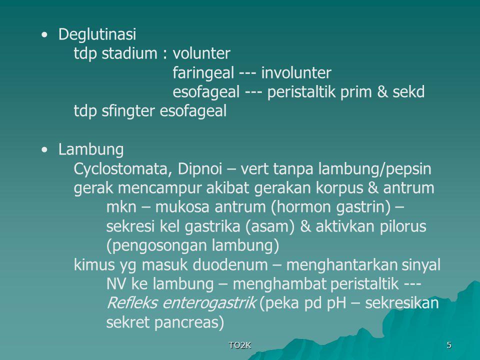 TO2K 6 Usus halus kimus di duodenum – segmentasi lokal – kimus terbelah – proses pencampuran – aktivitas peristaltik meningkat setelah makan Iritasi mukosa usus --- peristaltic rush tdp katub ileosekalis & sfingter ileosekal Kolon bag proksimal (abs air & elektrolit) ; bag distal (menyimpan feses sampai dikeluarkan) kuda, kelinci, marmut – caecum besar – fermentasi – kurang efektif (seratnya masih kasar) tak tjd gerakan peristaltik --- mass movement yg mendorong feses ke anus (hanya beberapa kali tiap hari & paling lama 15 m) – defekasi tdp sfingter ani internus & eksternus