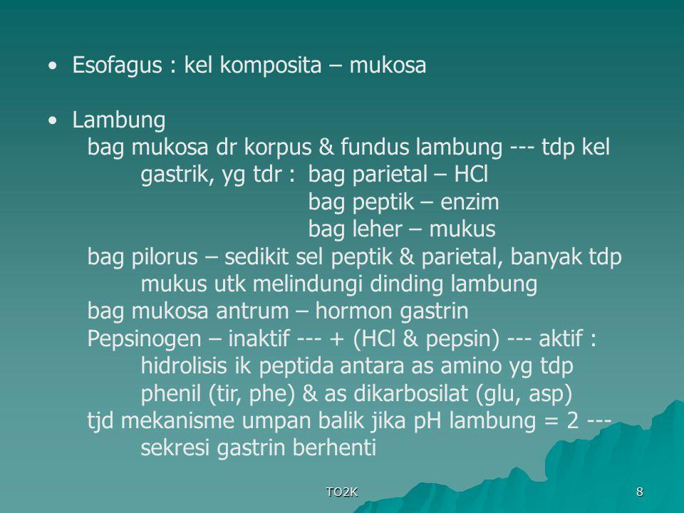 TO2K 8 Esofagus : kel komposita – mukosa Lambung bag mukosa dr korpus & fundus lambung --- tdp kel gastrik, yg tdr :bag parietal – HCl bag peptik – en