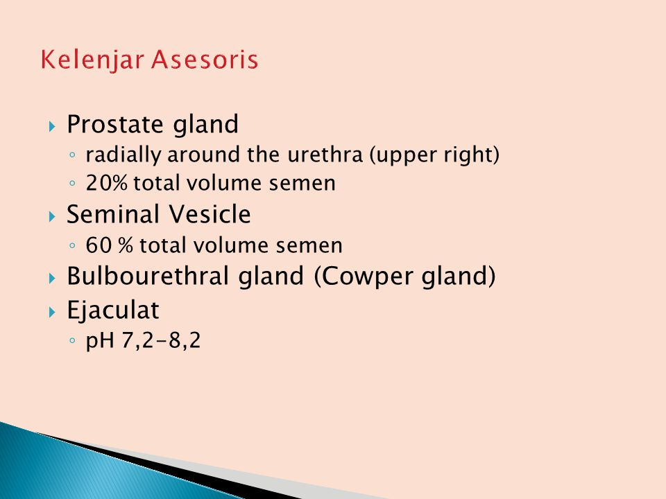  Prostate gland ◦ radially around the urethra (upper right) ◦ 20% total volume semen  Seminal Vesicle ◦ 60 % total volume semen  Bulbourethral glan