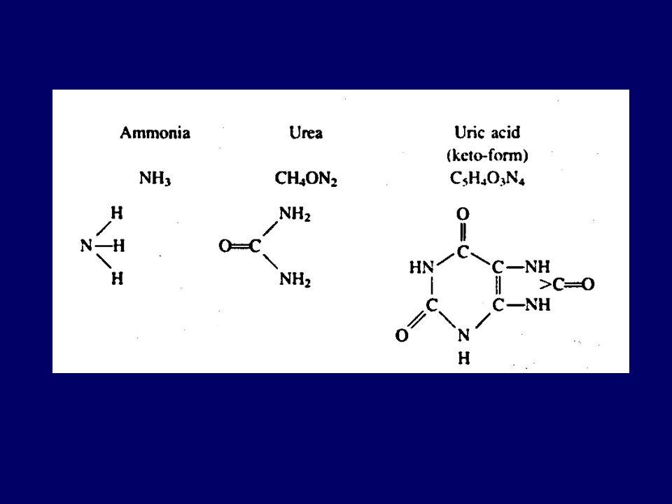 Ekskresi nitrogen Berdasar jenis produk akhir metabolisme nitrogen yang diekskresikan dominan, hewan dibedakan atas : (a) Ammonotelic (b) Ureotelic (c
