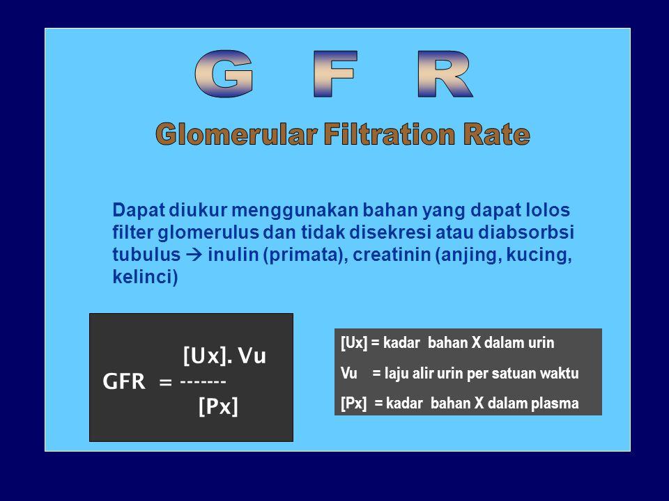 Kapiler glomerulus Tekanan darah protein LUMEN KAPILERURINARY SPACE FILTRAT GLOMERULUS