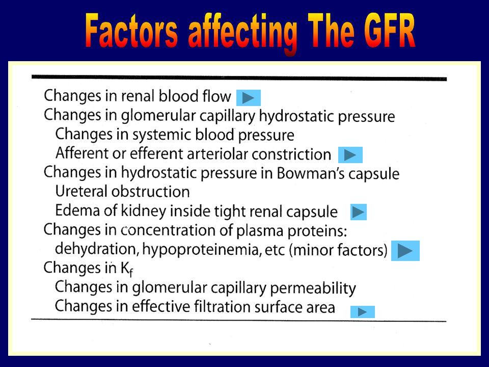 GFR = K f [(P GC – P T ) – (  GC –  T )] Kf = koefisien ultrafiltrasi glomerular (tergantung pada konduktivitas hidrolik-a.l. permeabilitas kapiler,