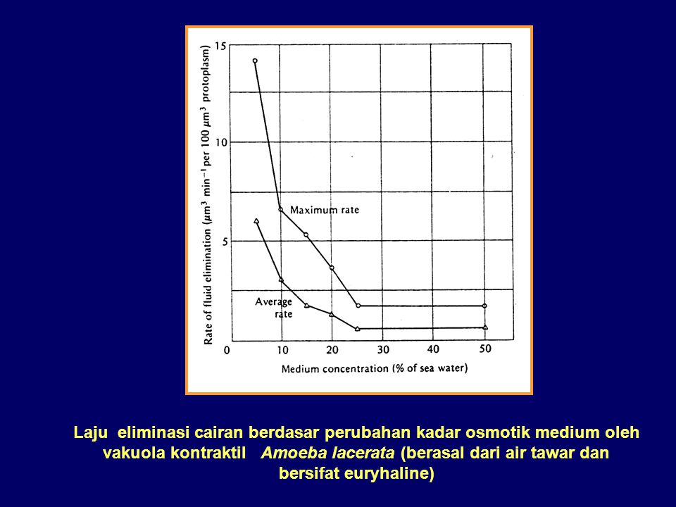 Ciliata air tawar  hiperosmotik - Vakuola kontraktil diperlukan untuk memelihara tekanan osmotik tubuh karena air cenderung masuk dan kelebihan air h