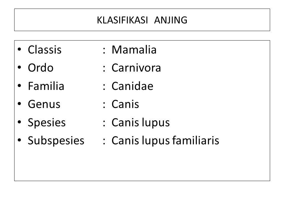 KLASIFIKASI ANJING Classis : Mamalia Ordo: Carnivora Familia: Canidae Genus: Canis Spesies: Canis lupus Subspesies: Canis lupus familiaris