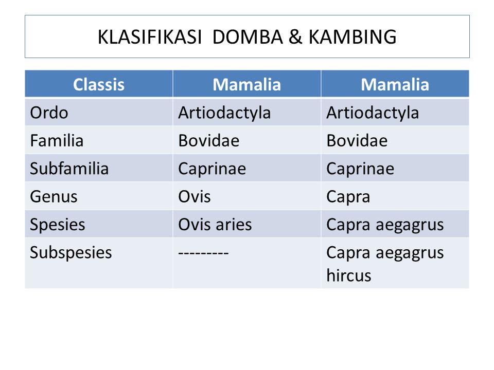 KLASIFIKASI DOMBA & KAMBING ClassisMamalia OrdoArtiodactyla FamiliaBovidae SubfamiliaCaprinae GenusOvisCapra SpesiesOvis ariesCapra aegagrus Subspesie